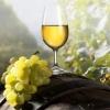 Экзотические вина от «ДАРА» - приглашает Всех!